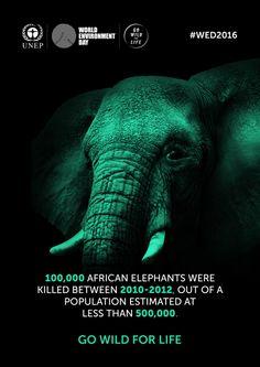 Elefante africano.