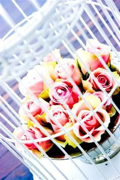 Roses in a Cage