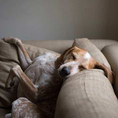 Maddie the Coonhound - Dogs Gone Viral