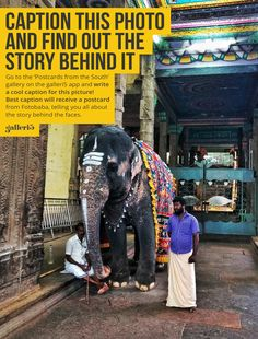Does this picture intrigue you? Do you want to know this Elephant's name and how he came to Madurai? If you are a story hunter, find this photo in the 'Postcards from the South' gallery on the galleri5 app and leave a quirky caption in the comments. You have the chance to get a personalized postcard from 'Fotobaba' George describing the story behind the picture and a souvenir from Madurai!  #roadtothesouth #postcardsfromthesouth #fotobaba #galleri5