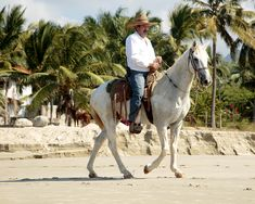 The Destination Wedding Vacation Destination Wedding, Exotic, Mexico, Romantic, Horses, Vacation, Animals, Vacations, Animales