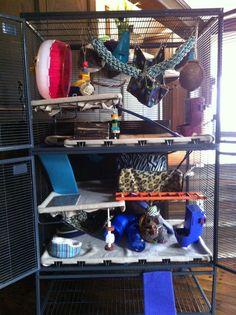 50 Best Pet Rat Cage Ideas Images Pet Rat Cages Pet Rats Ferrets