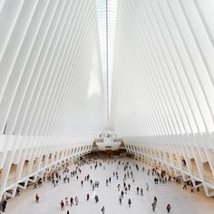 Santiago Calatrava's vast ribbed structure that soars over the World Trade Center Transportation Hub in New York is captured in images by Hufton + Crow