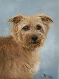 'Henry'. Norfolk terrier by Tania Robinson. Acrylic on canvas. Private commission 2013.