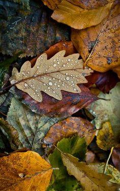 Herbstblätter im Regen - in den kleinen Dingen steckt oft mehr Schönheit als man denkt... | gefunden auf http://www.photo.net