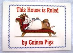 This house is ruled by Guinea Pigs
