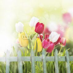 Frühlingsblumen vor Gartenzaun mit Hintergrund