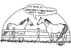 equine cartoons | horse cartoon | EQUINE Ink