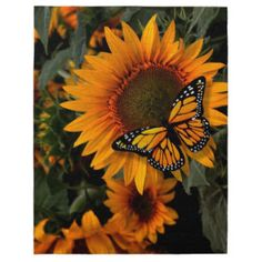Monarch Butterfly on a Sunflower butterfly wallpaper butterfly doodle Sunflower Iphone Wallpaper, Orange Wallpaper, Flower Phone Wallpaper, Butterfly Wallpaper, Sunflower Pictures, Butterfly Pictures, Sunflower Art, Cherry Blossom Watercolor, Watercolor Flowers