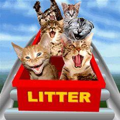 Daily Beautiful Gifts: Domain Name Litter Kitten