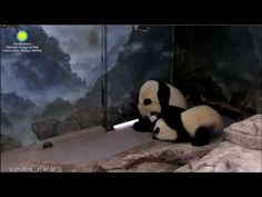 12-25-2016 Lil' Lun's 1st Christmas ~ Cub in a Tub - YouTube