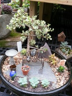 Succulents and bonsai with Jeremie miniatures.