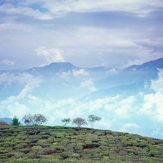 Happy Valley Tea Estate, Darjeeling, West Bengal, India