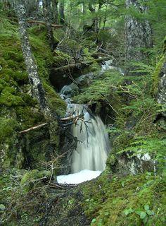 Forest Falls,Juneau Alaska