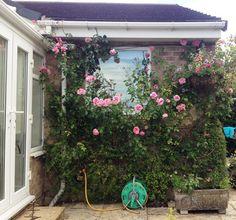 Open gardens back garden inspitation ideas
