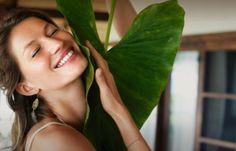 ¿Sabes cuáles son las plantas que más se usan en cosmética? Hay muchas y cada una tiene sus beneficios. ¡Descúbrelas!
