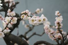 blossom !! spring is here ... <3