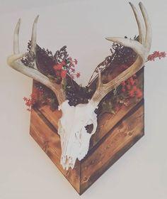 "Gave my European Mount that ""just finished plowing through some pretty flowers"" look. Antler Mount, Antler Art, Deer Mount Decor, Deer Antler Crafts, Deer Skull Decor, Painted Deer Skulls, Deer Head Decor, Antler Wall Decor, Looks Country"