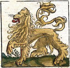 Animal - Cat - Lion D'Afrique
