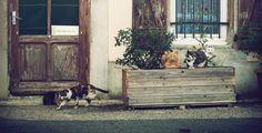 5 powodów, dla których kot powinien zostać twoim panem