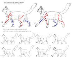 How to Cat: Walk Cycle by SowoD Рекомендации По Дизайну, Анимационные Зарисовки, Анимационный Персонаж, Учебники По Компьютерной Живописи, Уроки Рисования, Как Рисовать, Рисунки Животных, Мотоциклетные Шлемы, Анатомия Животных