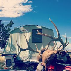 Wonder what camp will look like this year 🤔 we've got elk hunts that start as early as the end of August and a later rifle hunt in October. It's gonna be a great season! #hushlife #jumpingjacktrailers #camping #elk #antlers #bullelk