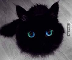 I think this cat may be magical