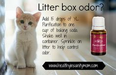 Essential oils to help with litter box smells or carpet powder. No chemicals, so it's safe for you and pets too!