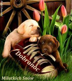 Cute Puppies Dog Throw Cushion Covers 18 X 18 Inches Cute Puppies, Dogs And Puppies, Animals And Pets, Cute Animals, Dog Throw, Dog Cushions, Smiling Dogs, Gif Animé, Spring Art