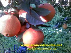 arancedisicilia