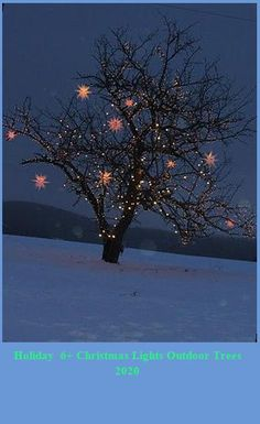 Christmas tree outdoors christmas lights outdoor trees Holiday 6+ Christmas Lights Outdoor Trees 2020 Christmas Lights Outdoor Trees, Christmas Yard Decorations, Christmas Tree, Christmas Projects, Beautiful Space, The Outsiders, Seasons, Holiday, Outdoors