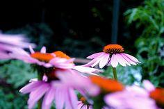summertime gardens!
