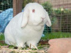 Details - Find a pet - rspca.org.uk