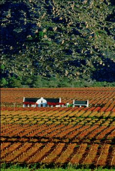 wine country, Hex River Valley, western Cape, South Africa. Photo: SA Tourism