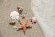 On the hunt for seashells and other buried treasure? Here's where to look
