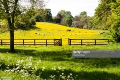 The Cotswolds In Springtime Horses And Sheep In A Field Of ...