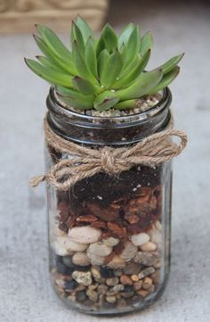 Great hostess gift - plant a succulent into a glass jar:
