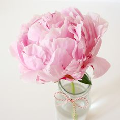 Simple pink peony. #flowers #floral #arrangement