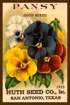 Olde America Antiques | Quilt Blocks | National Parks | Bozeman Montana : Flowers - Pansy Good Mix