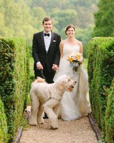 This couple had just one request when choosing their venue: it had to allow dogs so that their beloved goldendoodle could roam freely