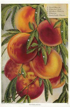... Peach Kitchen Accessories By 1000 Images About Peach Kitchen Decor On  Pinterest ...