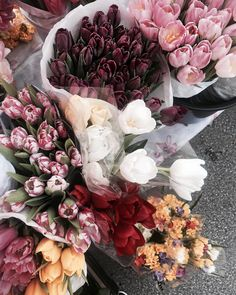 Tulipes♥