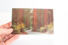 REDWOOD HIGHWAY Post Card,Redwood Tree Post Card, Redwood Forest card, vintage pohotgraph,Vintage Memento,Vintage Souvenir, paper ephemera