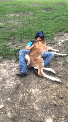 Sunny and ADORABLE BABY HORSE! All the baby horse wants to do is cuddle. Oh if you've ever been around horses you could feel her joy wonderful! Animals And Pets, Baby Animals, Funny Animals, Cute Animals, Beautiful Horses, Animals Beautiful, Fennec, Gato Gif, Horse Videos