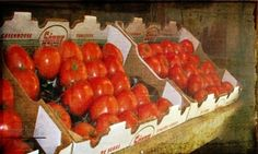 Shoply.com -Fine Art Print : Tomatoes ....The Country Kitchen Collection 12x4. Only $15.00