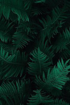 BOTANY - DARK - GREEN - PLANTS - FERN - PHOTOGRAPHY Art Print by photoshop