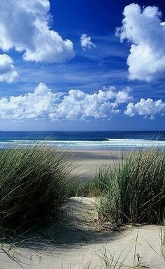 Dunes at Gwithian, near St Ives, Cornwall, UK. Fell upon this when I realised I actually live 10 minutes away from this beach! Cornwall really can be paradise Foto Picture, I Love The Beach, Nice Beach, Pretty Beach, Beach Scenes, Ocean Beach, Ocean City, Beach Grass, Nature Beach