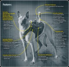 """_A Storm Inc top-end Intruder """"canine tactical assault suit"""" used by the U. Navy SEAL's Working Dogs (eg. 'Cairo' a Belgian Malinois). Military Working Dogs, Military Dogs, Police Dogs, War Dogs, Belgian Malinois, Malinois Dog, Navy Seals, Special Forces, Special Ops"""