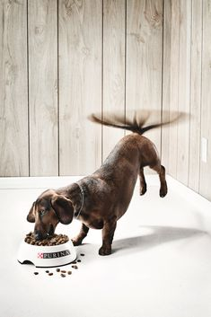 purina dog food ad. photography. clever.