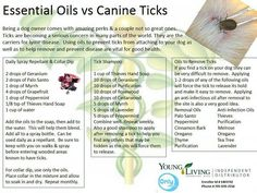 Dogs Tick Prevention